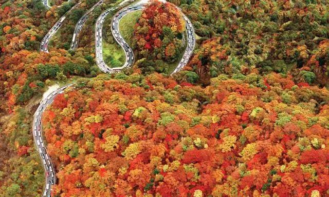 又到一年赏枫季 教你用六种赏枫方式看遍日本万种枫情