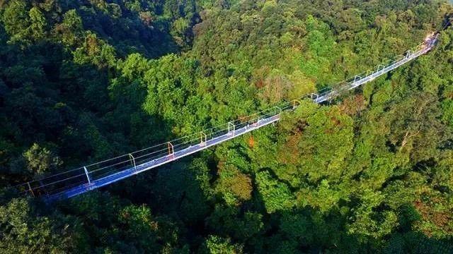 """自去年开始,柳州融水双龙沟景区玻璃悬索桥就几度成为热门的旅游景点之一。融水双龙沟景区玻璃悬索桥与其他玻璃栈道不同的是,它是悬索桥结构,且真正""""悬浮"""",多人走上去会上下左右摇摆晃动,更刺激!"""