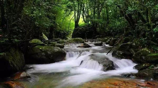 景点:百花岭—江苴生态旅游区景区集原始森林垂直分布,珍稀动