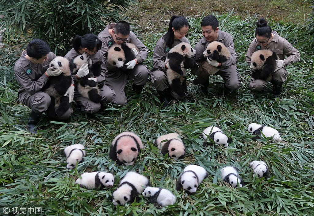又一条景观大道试运行:成都出发3小时到泸定!看熊猫赏贡嘎