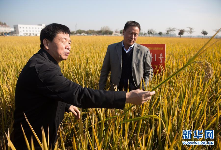 """(新华视点·图文互动)(1)国家科技奖3项授予""""水稻科学家"""",预示百姓饭碗将发生哪些革命?"""