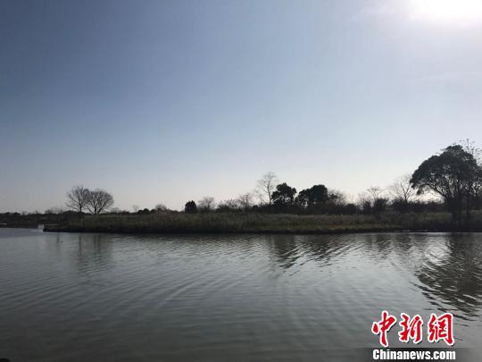 生物多样的下渚湖湿地饶雨蒙摄