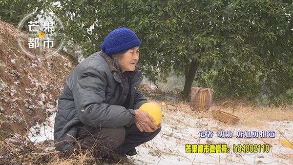 老太为救白血病外孙女走10里路卖柚子 每天吃两顿红薯