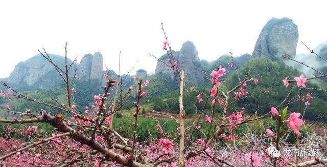 名胜区南武当山风景区内的群峰脚下,每当桃花盛开时,万亩桃园环抱大片