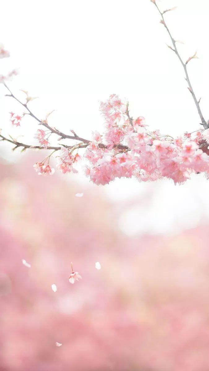 武汉樱花节开幕