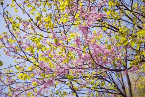 2018年第三届尧山山花节来袭众多精彩活动邀你参与