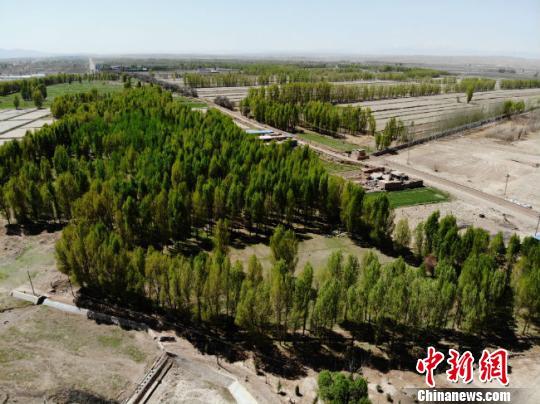 """""""彩虹山丹""""总长约为5公里,主要范围是山丹新城区去往大佛寺的沿途道路。绿地建设总面积达到2500亩,其中造林绿化700亩,种植各类花卉1800亩,栽植各类苗木40万株。 杨艳敏摄"""