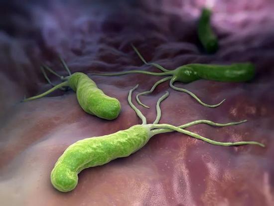 超一半中国人携带这个病菌