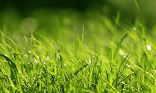 它没有白杨的挺拔俊秀,也没有杨柳的多姿婀娜,春来雁归,小草发芽,看似