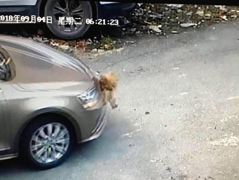 男子开车撞死1只鸡,事后却赔了6000多…怎么回事?!