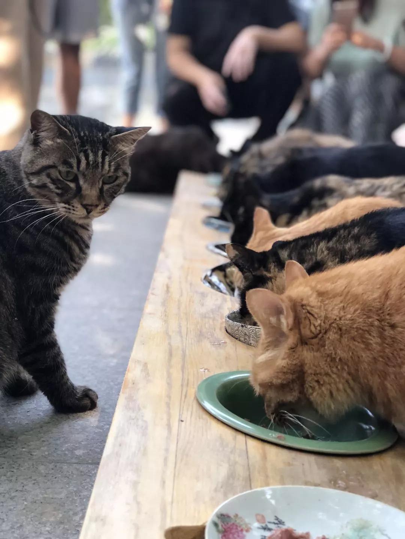萌化了 史上最有文化的貓帶你逛博物館