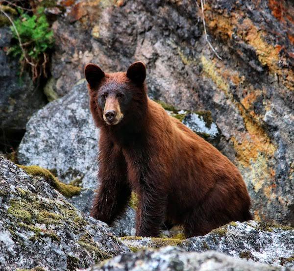独自一人泛独木舟 竟然撞见一头美洲黑熊!