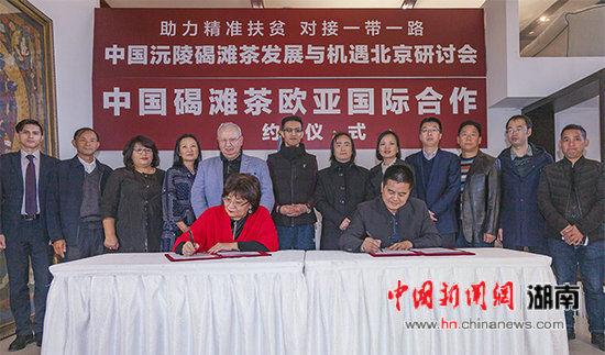 """湖南沅陵""""攀洋亲""""做大茶产业国际""""蛋糕"""""""