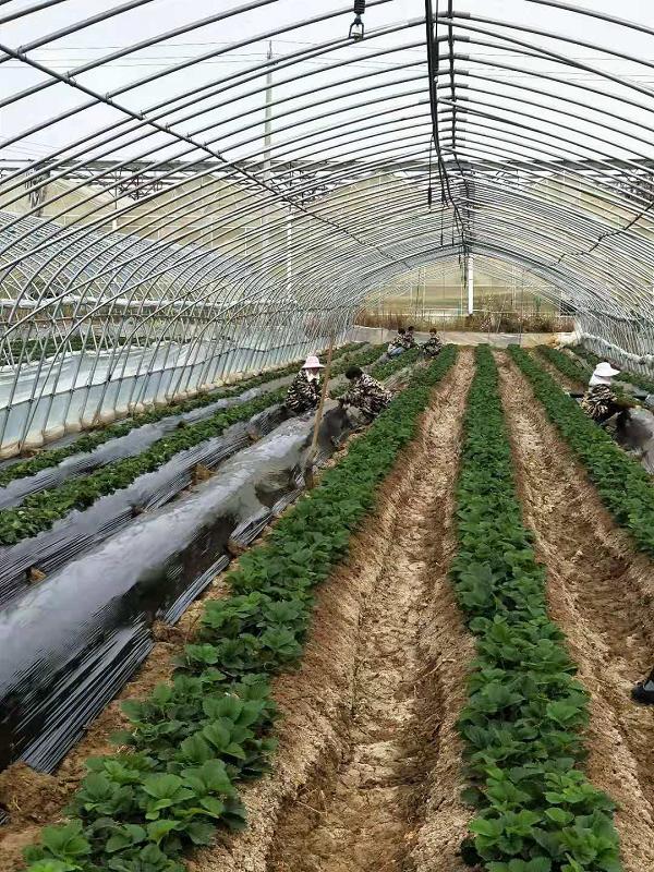 安徽定远:聚焦乡村振兴战略谱写绿色发展新篇章图19
