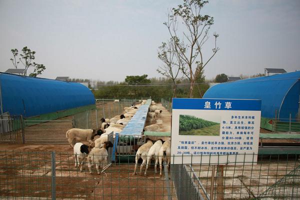 安徽定远:聚焦乡村振兴战略谱写绿色发展新篇章图3