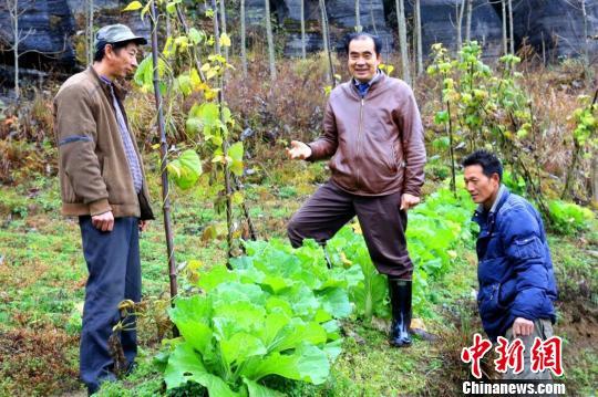 湖北一驻村干部发展特色产业助农民脱贫增收