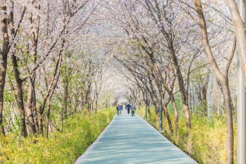 想在韩国来场春游做个皮肤管理?这几个必去的樱花打卡圣地叫上你的小伙伴一起去吧!
