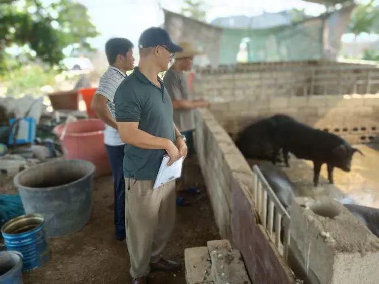 乐东县畜牧兽医服务中心积极开展非洲猪瘟排查