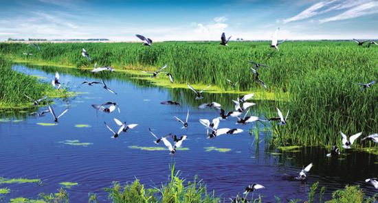 龙凤湿地自然保护区
