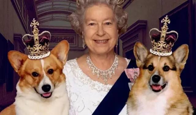 女王的柯基影评