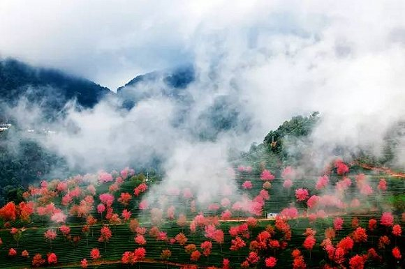 樱花梦幻风景图片