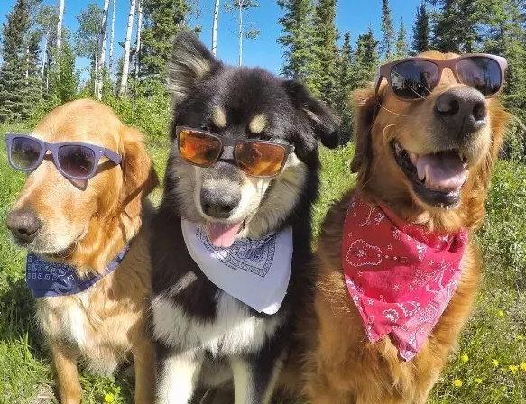 > 时尚女人   天气好的时候,夫妻俩就会带着三个小家伙到处游玩拍照
