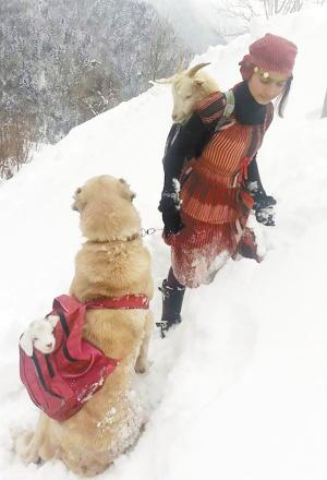 11岁女孩和狗狗风雪中救一对山羊母子 - 卢月钦先生 - 卢月钦