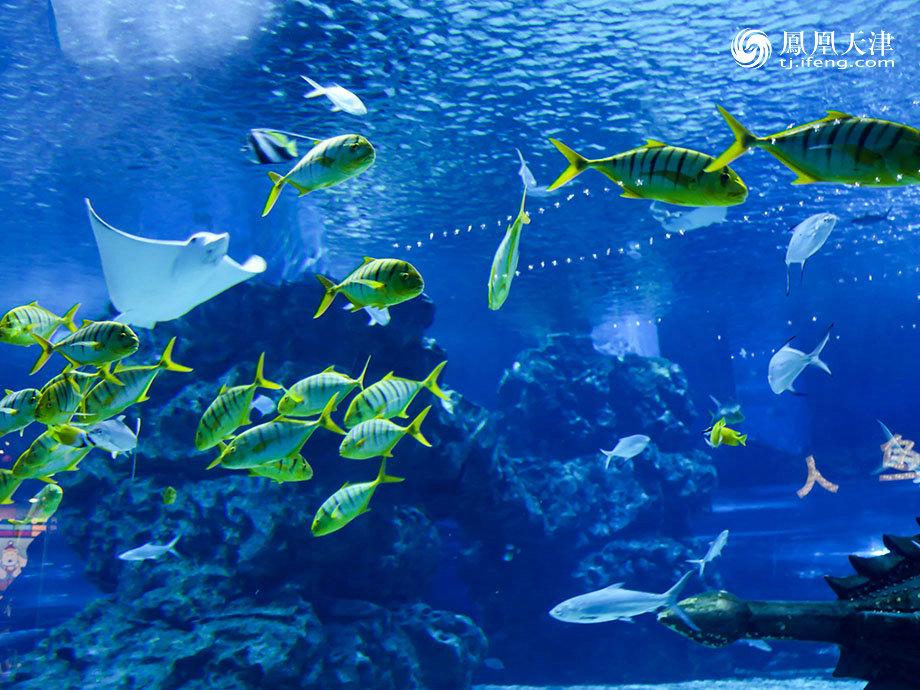 生物品种最全的极地海洋动物展览馆,场馆现正在申报吉尼斯世界之最.
