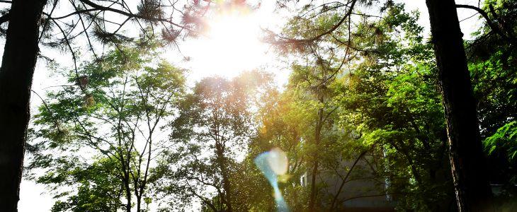 遇见金华24节气之立夏:万物并秀