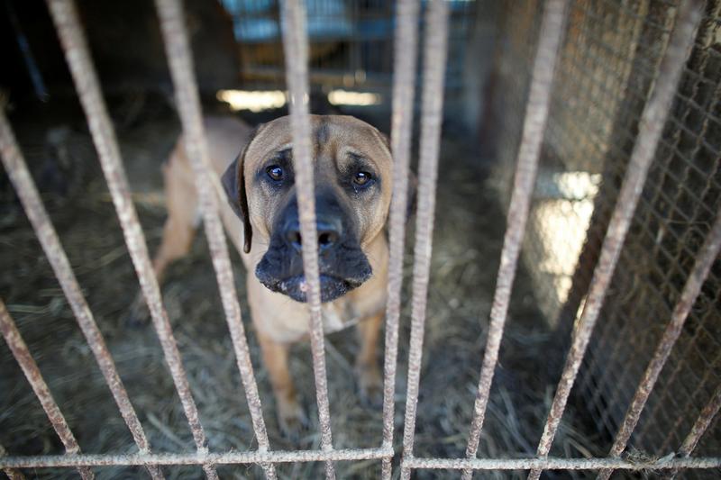 韩国动物保护组织前往狗肉场展开救援