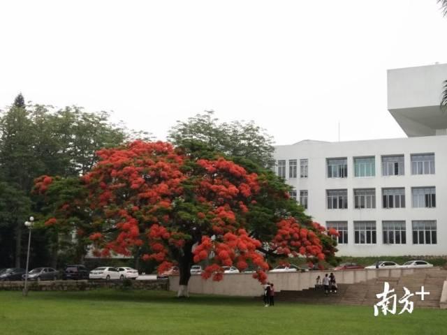 汕大校園。葉楠楠攝