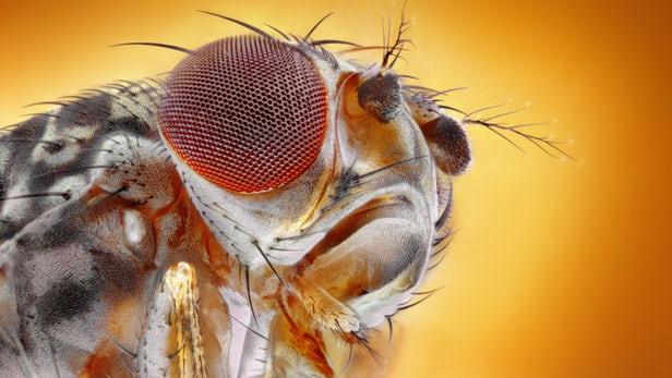 科学家首次在昆虫体内发现引发疼痛证据,或助人类解开此病根源