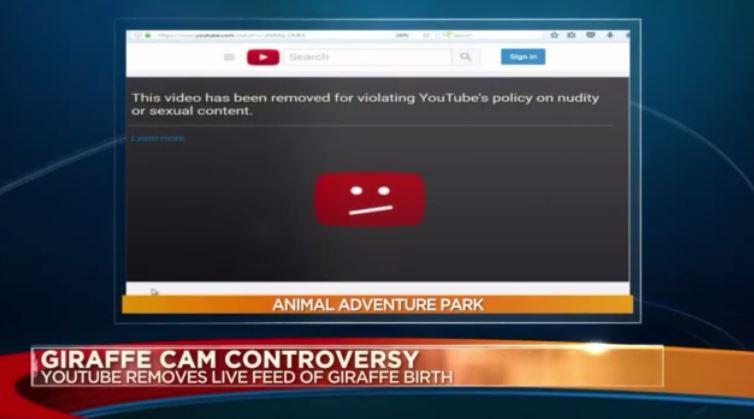 谁有黄色网站妈妈_昨天中午,国外视频网站youtube,把一个长颈鹿妈妈生小崽儿的视频直播