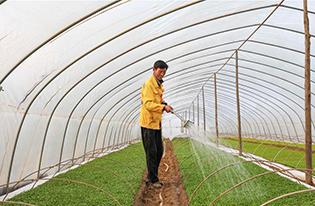 安徽明光特色产业助农增收