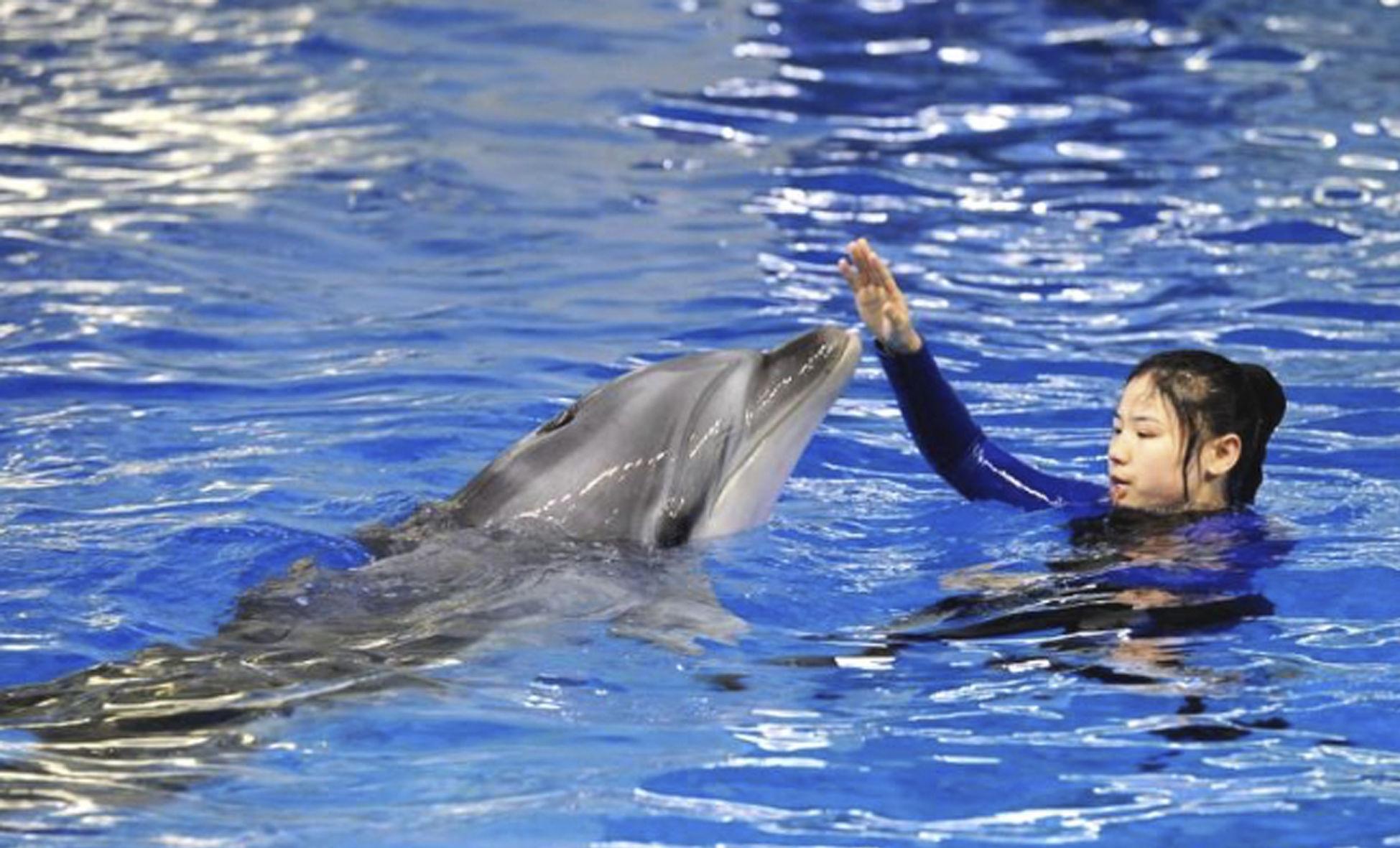 """90后女驯兽师和她的海豚搭档"""" width="""