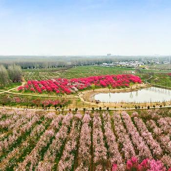 安徽赏花地图|庐阳三十岗桃花