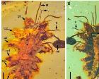 中国科学?#20197;?#32517;甸琥珀中发现一亿年前昆虫拟态行为